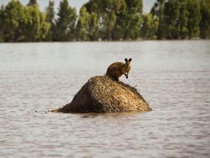 Kangaroo finds refuge